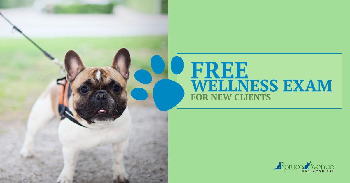 Pet Wellness Exams in San Francisco, CA